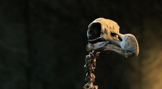 bones-of-dodo